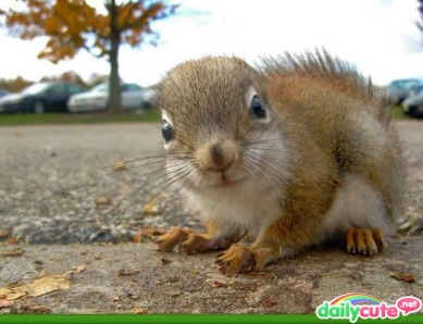 so cute squirrel